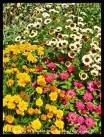 Flower Photograph's By Artist Paul Milton Artist B.A.Honnours Copyright (c)